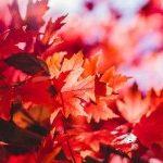 Поездка в Японию на красные клены – 10 дней